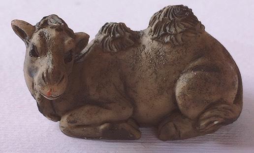 cammello seduto